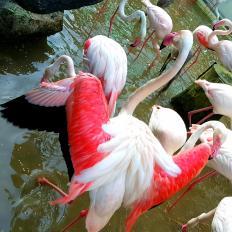 CM Zoo Pink Flamingos